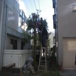 上野邸 伐採工事
